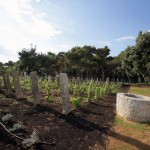 3072 -Solaris Dalmatian Ethno Village _vineyards_and_well_next_to_the_beach